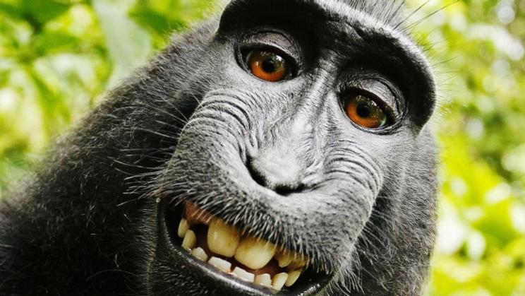 Gambit Monkey